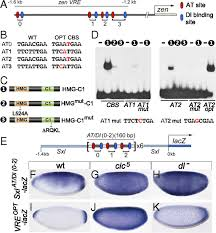 si e social cic capicua controls toll il 1 signaling targets independently of rtk