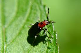 Pictures Of Tiny Red Bugs by Woods Walks And Wildlife Garden Bugs Up Close