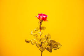 a flower you shouldn t the universe is neutral but you shouldn t be or some thoughts