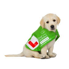 assistance dogs animal translation