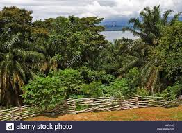 tropical rainforest native plants tropical rainforest vegetation and bay of luba island of bioko