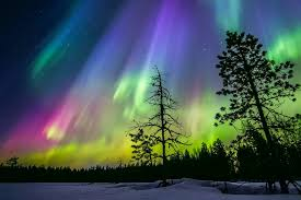 finland winter sky northern lights snow forest tree