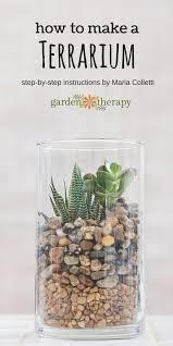 create a gorgeous soilless terrarium garden