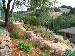 native plants of southern california california landscaping ideas rolitz