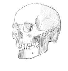 skull sketch by zeenovos on deviantart