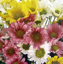 color mood of a garden composition of a garden flowers