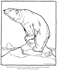 polar bear color page polar bear coloring sheets and pictures
