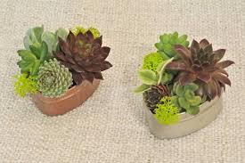 photos of succulents types of succulent plants