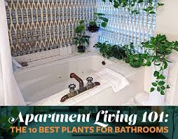 Plants To Keep In Bathroom Apartment Living 101 The 10 Best Plants For Bathrooms 6sqft