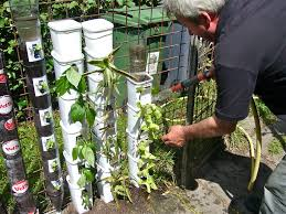 fall vertical garden bangalore containerbottle gardening page