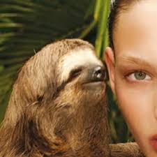 Make A Sloth Meme - whisper sloth meme generator imgflip
