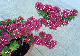 georgetown flowers georgetown guyana