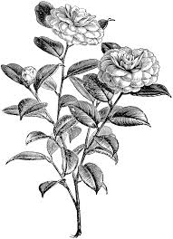 camellia flower tattoo free here