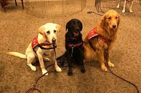 hero dogs train to help veterans the washington post