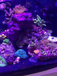 stunner led aquarium light strips biocube callout page 8 reef2reef saltwater and reef aquarium