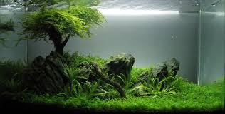 Aquascaping Techniques One Tree Hill Planted Aquaria Pinterest Aquariums Betta And