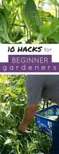 the best gardening tips for beginners flowergardenforbeginners