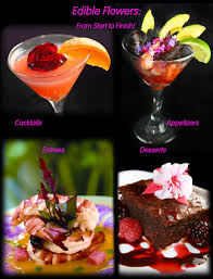 edibles flowers edible flowers from start to finish