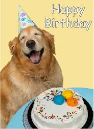 Birthday Meme Dog - unique happy birthday memes with funny cats dogs and cute animals