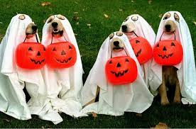 Pet Halloween Costumes Pawtastic Diy Halloween Costume Ideas For Your Dog Familypet
