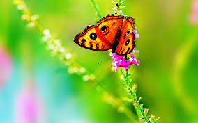 real colorful butterfly on flower