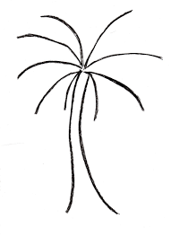 palm tree drawing outline palm tree drawing samantha bell
