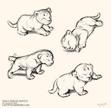 pictures cool animal sketches drawing art gallery