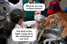 Eye Of The Tiger Meme - it seems like the band survivor really knew what they were singing