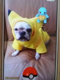 Halloween Costumes Bulldogs French Bulldog Boston Terrier Pug Dog Froodies Hoodies Halloween