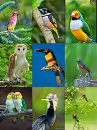 bird wallpapers birds wallpapers beautiful birds pictures in hd apps 148apps