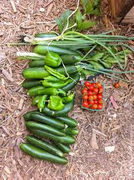 community and home gardens increase vegetable intake and food