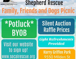 australian shepherd rescue san diego and friends southern california german shepherd rescue u2013 adopt a friend u2013 for