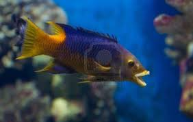 pictures of different fishes on animal picture society