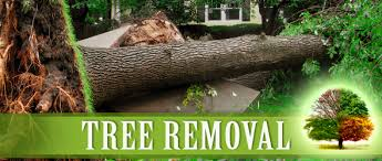palm tree trimming service in sugar land affordable tree service