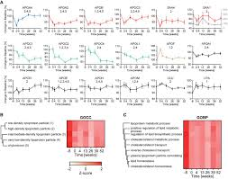 proteomics reveals the effects of sustained weight loss on the