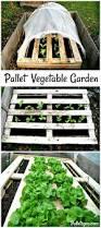 diy pallet vegetable garden pallets pro