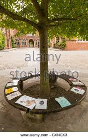 Circular Bench Around Tree Notices Pinned To Circular Bench Around Tree At Winchester College