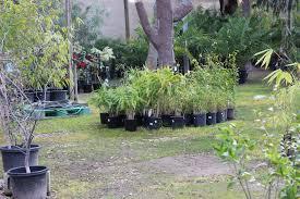 plants planter boxes melbourne pots galore