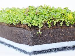 columbia green technologies green roof systems vegetative roof