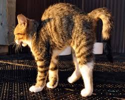 halloween kittens toronto grand prix tourist a toronto blog halloween cat cat