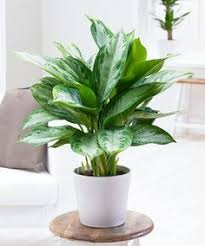 indoor trees that don t need light 29 most beautiful houseplants you never knew about houseplants