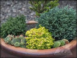 93 best conifer garden images on pinterest mini gardens garden