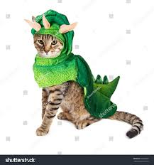 cute young cat wearing dinosaur halloween stock photo 503709070