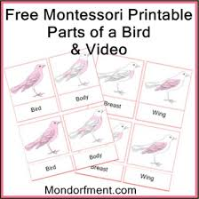 26 montessori bird study images bird theme