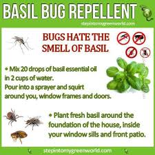 Patio Insect Repellent 42 Best Insect U0026 Pest Control Images On Pinterest Pest Control