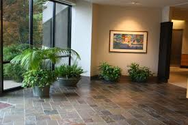 indoor plant design trends for orange county offices and homes