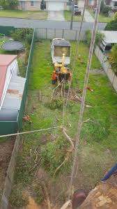 hunter tree masters u2013 safe and reliable