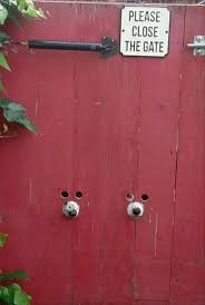 Funny Door Stops by 276 Best Funny Animals Images On Pinterest Animals Funny