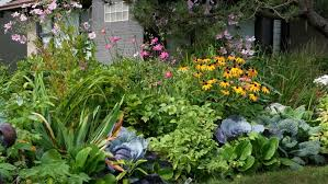 edible ornamental plants for your garden angie s list