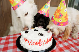dog birthday party to throw a dog party get leashed magazine